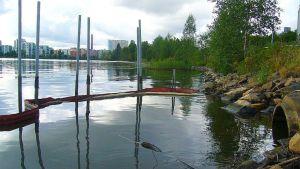Öljypuomi Jyväsjärvessä.