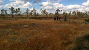 Metsähallituksen työntekijät tähyilevät upeaa suomaisemaa Kauhaneva-Pohjankankaan kansallispuistossa.