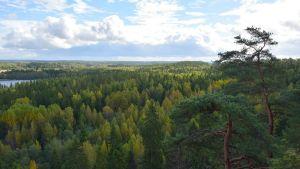 Syksyinen metsämaisema Aulangolla