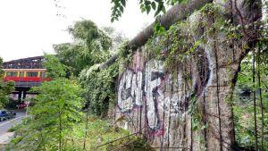 Pätkä Berliinin muuria, jota peittävät graffitit ja köynnökset. Taistalla paikallisjuna ylittää siltaa.