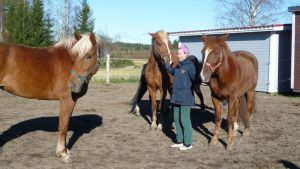 Nainen kolmen hevosen kanssa aitauksessa.