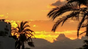 palmuja auringonlaskussa
