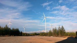 Tuulivoimaloita Iin Olhavassa.