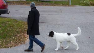 Koiranulkoiluttaja sivuprofiilista