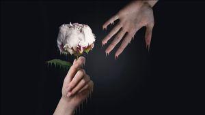 Ihminen ojentaa kukan toiselle