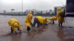 Työntekijät keräävät oksia ja lehtiä hurrikaani Patrician tuomien sateiden vuoksi tulvivalta kadulta Manzanillon kaupungissa.
