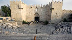 Kissa istuu Damaskoksen portin edustalla Jerusalemissa.