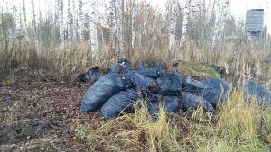 Haravointijätettä muovisäkeissä Porin kaupungin puistoalueella.