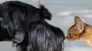 Koira ja kissa.