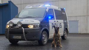 Poliisikoira auton edustalla.