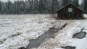 Lato ensilumen peittämällä märällä pellolla.