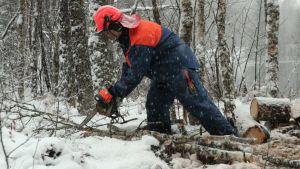 Rajamies karsii puuta.