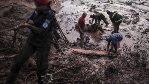 Palomiehet yrittivät pelastaa mutaan juuttunutta hevosta Bento Rodriguesin kylässä Brasiliassa 6. marraskuuta.