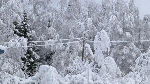 Puu taipuneena sähkölinjan päälle
