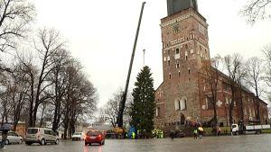 Nosturi pystyttää joulukuusta Turun tuomiokirkon edustalle.