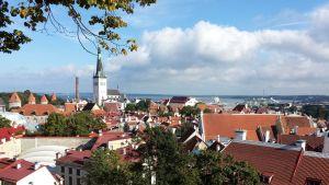 Tallinnan vanhankaupungin punaisia kattoja.