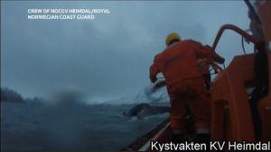 Rannikkovartija veneen kannella ja valaan pyrstö vedessä.