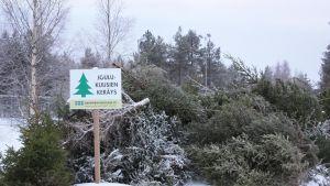 joulukuusikeräys Rovaniemi