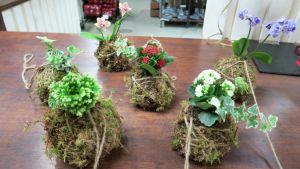 Japanilaisia kokedama-kukka-asetelmia pöydällä