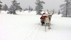 Joulupukki porojen vetämänä reessä.