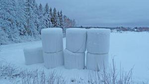 Muoviin käärittyjä rehupaaleja talvisessa maalaismaisemassa.