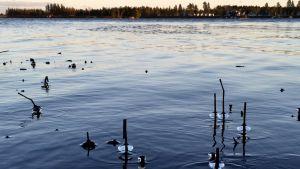 Kyrkösjärvi Seinäjoella oli jouluviikolla vielä ilman jääpeitettä.