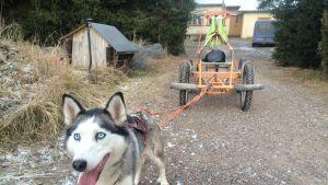 Koiria varten rakennetun kärryn tulee olla vahvarakenteinen.