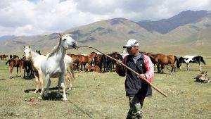 Kirgisiassa paimentolaisperinteet ovat vahvoja ja hevoset arvostettuja.