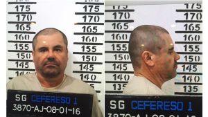 Guzman kuvattuna edestä ja sivusta. Takana mittataulukko, joka kertoo hänen olevan noin 167 sentin pituinen.
