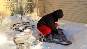 Tuija Isopahkala näyttää, kuinka vaatteita hierotaan lumella.