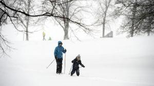 Ulkoilijoita hiihtämässä sankassa lumisateessa Helsingissä.