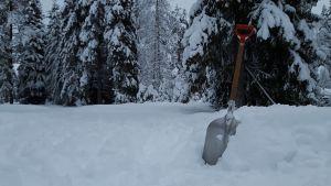 Lunta ja lumilapio lumisten puisten keskellä.