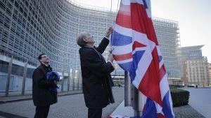 Mies nostaa Britannian lippua salkoon Euroopan komission edessä Brysselissä.
