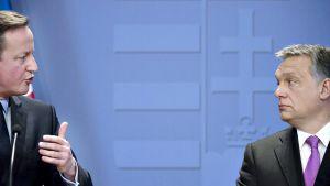 David Cameron ja Viktor Orban.