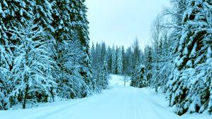 Lumisia puita ja latu.