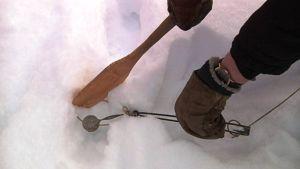 Jalkanaru asetetaan ketunjäljelle  ja peitetään ja viimeistellään jäljet niin ettei kettu huomaa ansaa.
