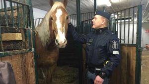Ratsupoliisi, poliisihevonen, hevonen, Ivan
