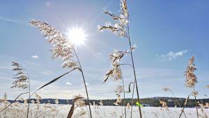 Aurinkoinen ja talvinen järvimaisema.