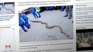 Käärme.