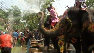Thaimaa elefantit
