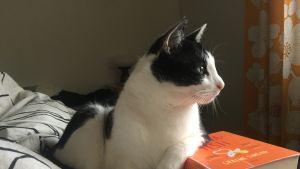 Kissa katsoo ulos tassu kirjapinon päällä