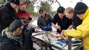 Ville Haapasalo opettelee kalan perkausta