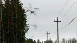 Helikopteri raivaa sähkölinjaa.