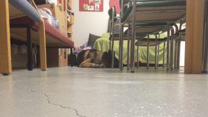 Halkeama löytöeläintalon lattiassa.