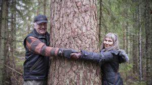 Olavi Sillanpää ja Luonnonperintösäätiön toiminnanjohtaja Anneli Jussila halaavat valtavan kokoista ikihonkaa.