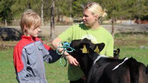Netta Rummukainen opettaa 14-vuotiaalle Henri Timoselle Junior Handler -kisassa tarvittavaa vasikan käsittelyä.