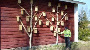 Vesa Pölkki on ripustanut 25 linnunpönttöä aitan seinään.