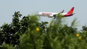 Laskeutumassa oleva SpiceJetin kone puiden yläpuolella.