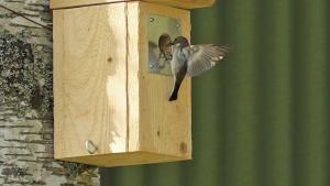 Lintu lentämässä sisään linnunpönttöön