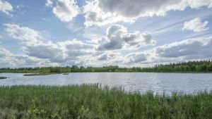 Rastunsuon lintujärvi